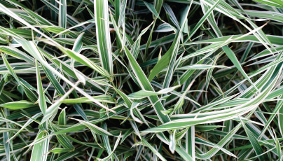 Weed grass